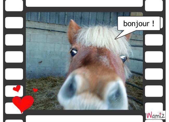 lol le poney, lolcats réalisé sur Wamiz