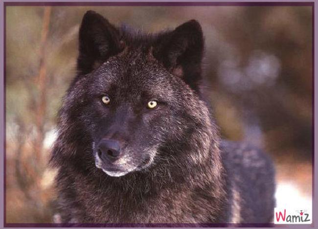 loup, lolcats réalisé sur Wamiz