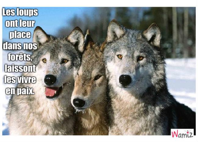loups, lolcats réalisé sur Wamiz