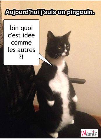 chat et rencontre algerie