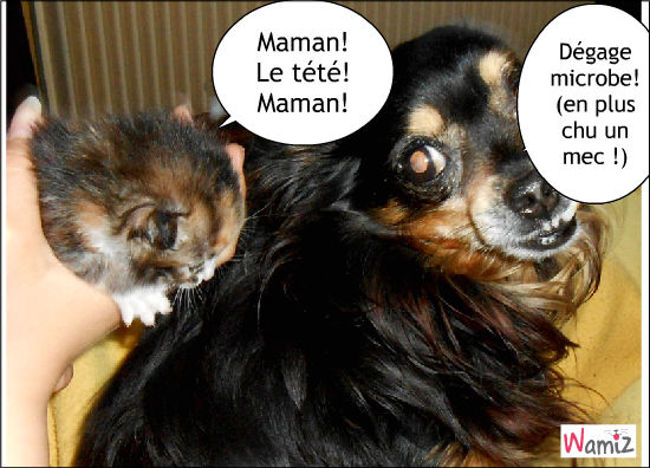 Maman, lolcats réalisé sur Wamiz