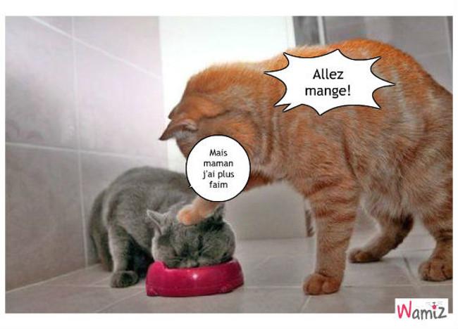 Maman chat, lolcats réalisé sur Wamiz