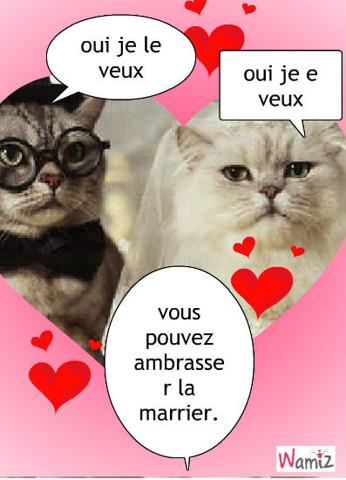 marier et chat, lolcats réalisé sur Wamiz