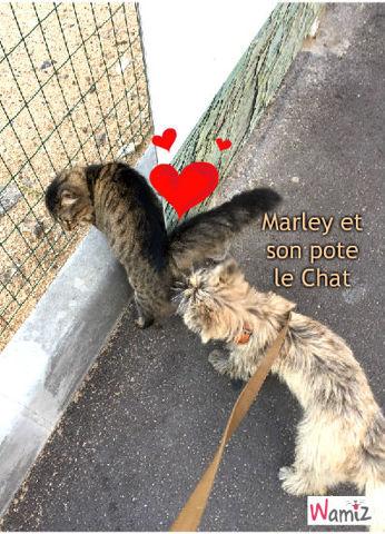 Marley et son pote le Chat, lolcats réalisé sur Wamiz