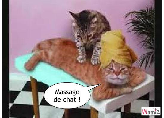 Massage, lolcats réalisé sur Wamiz
