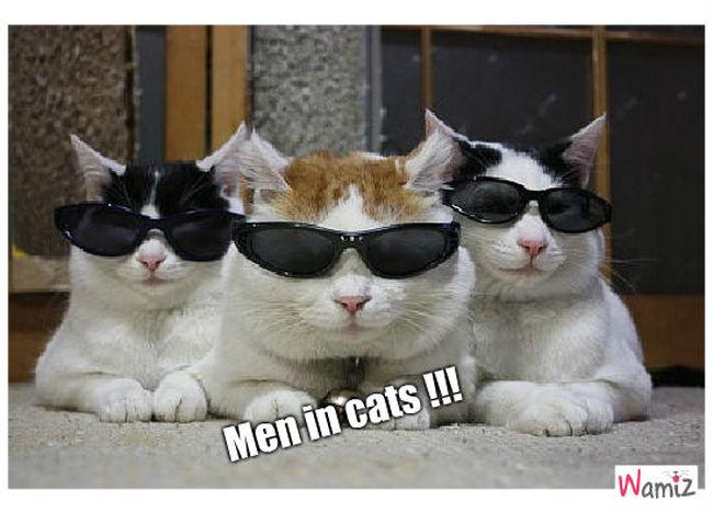 Men in cats, lolcats réalisé sur Wamiz