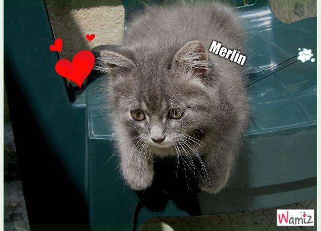 Merlin se Sauve, lolcats réalisé sur Wamiz