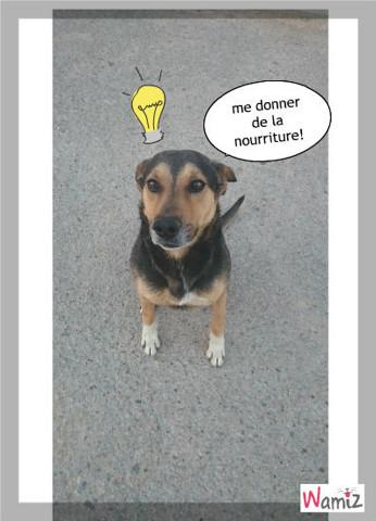 mi perro, lolcats réalisé sur Wamiz