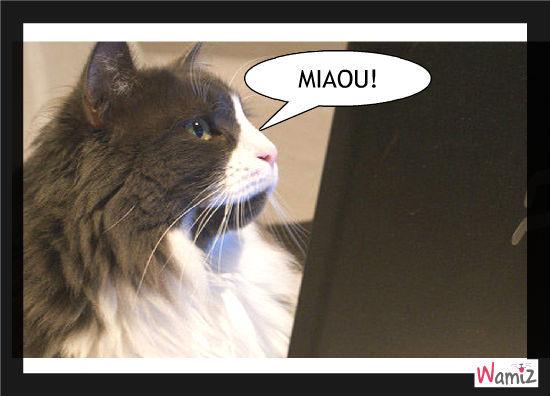 Miaou miaou, lolcats réalisé sur Wamiz