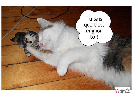 Petit chats rigolos - Image de petit chat ...