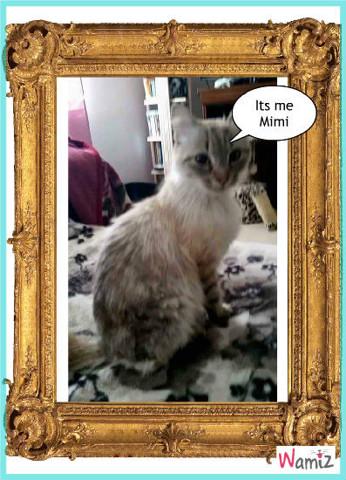 Mimi la chatte, lolcats réalisé sur Wamiz