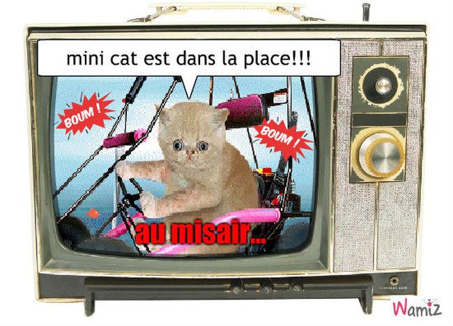 mini cat , lolcats réalisé sur Wamiz