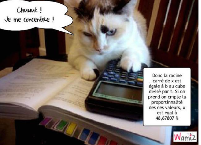 Minou se met aux math !, lolcats réalisé sur Wamiz
