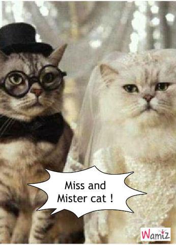 Miss and Mister cat, lolcats réalisé sur Wamiz