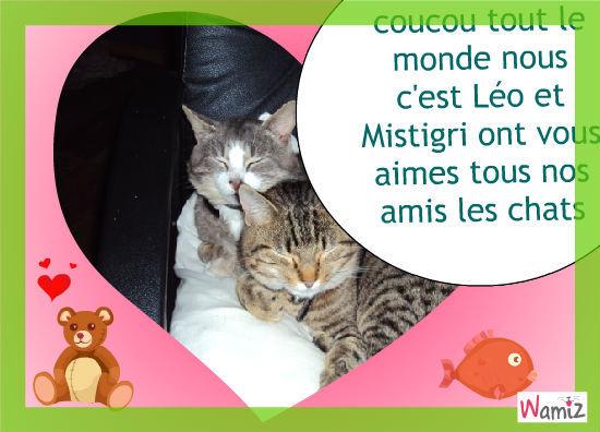 Mistigri et Léo, lolcats réalisé sur Wamiz