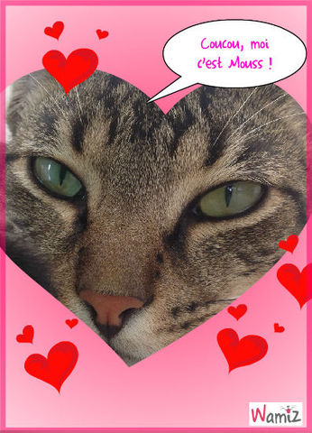 Mon chat à moi, lolcats réalisé sur Wamiz