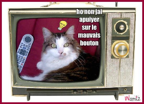 mon chat dans ma tele, lolcats réalisé sur Wamiz