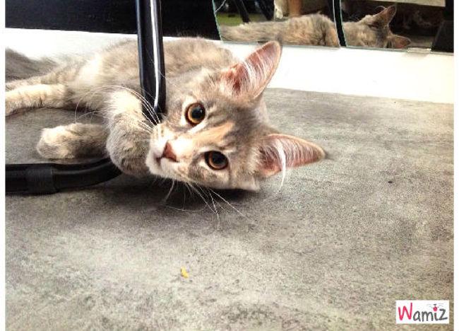mon chaton, lolcats réalisé sur Wamiz