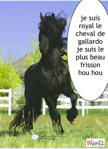 mon cheval adoré, lolcats réalisé sur Wamiz