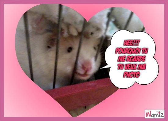 mon hamster m'envoie ailleur , lolcats réalisé sur Wamiz