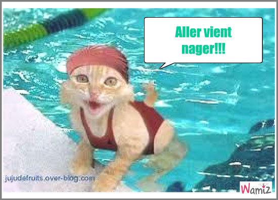 nager avec un chat , lolcats réalisé sur Wamiz