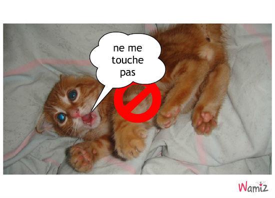 ne touche pas, lolcats réalisé sur Wamiz