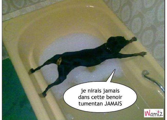 nn pas le bain , lolcats réalisé sur Wamiz