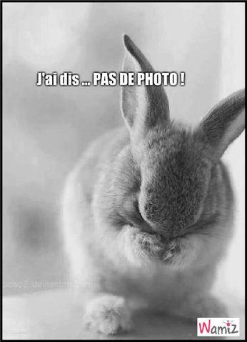 No Photo Please !, lolcats réalisé sur Wamiz