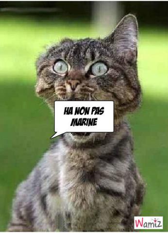 non aux chattemittes, lolcats réalisé sur Wamiz