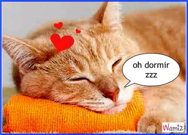 oh dormir, lolcats réalisé sur Wamiz