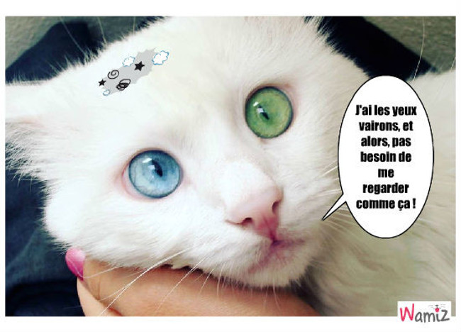 Oh ! Les beaux yeux !, lolcats réalisé sur Wamiz