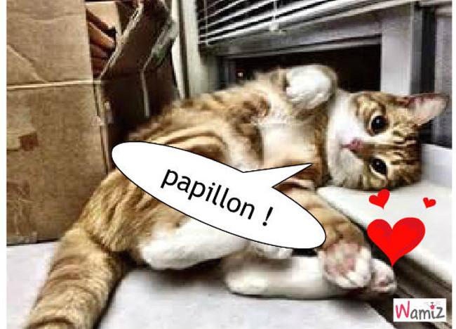 oh un petit curieuxoh un chat lol cat, lolcats réalisé sur Wamiz