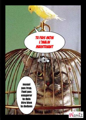 oiseau VS chat, lolcats réalisé sur Wamiz