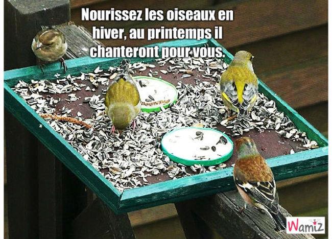 oiseaux, lolcats réalisé sur Wamiz