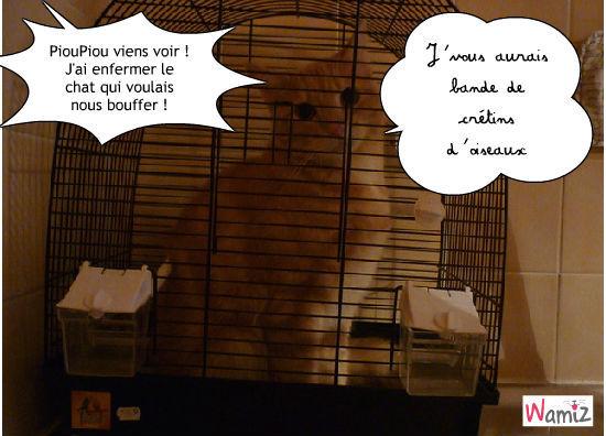 Oiseaux vs chats, lolcats réalisé sur Wamiz