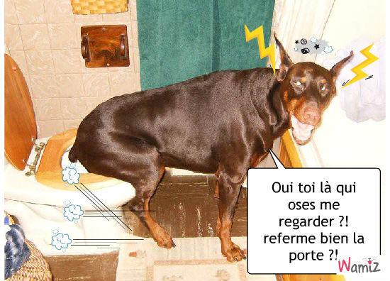 ... Pictures photo chien le plus grand du monde www p1q eu funny pics