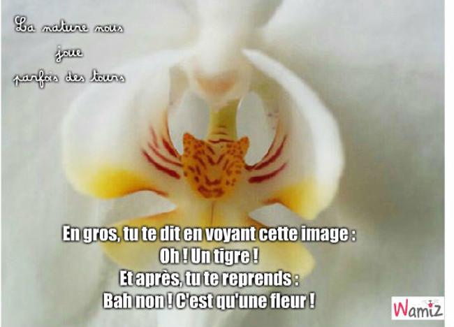 Orchidée, lolcats réalisé sur Wamiz