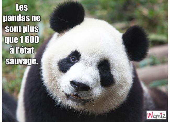 panda, lolcats réalisé sur Wamiz