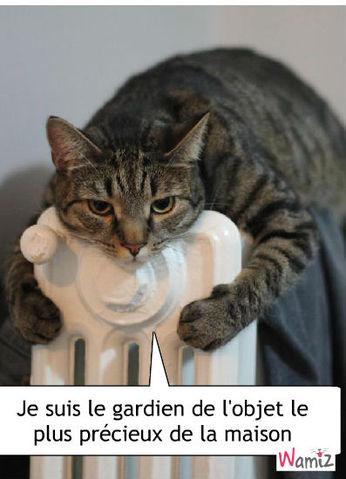 Wamiz : le radiateur est le meilleur ami du chat