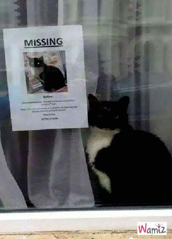 Perdu chat noir et blanc, lolcats réalisé sur Wamiz