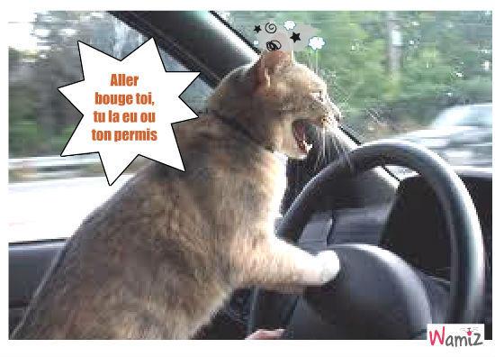 photo permis de conduire humour