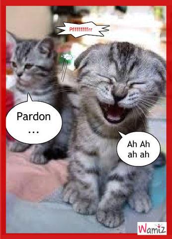 Petit chats rigolos - Photo de chaton rigolo ...