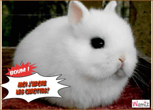 petit lapin, lolcats réalisé sur Wamiz