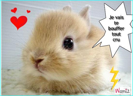 Petit lapin trop chou mangeur d 39 homme tooniz lolcats - Photo de lapin mignon ...