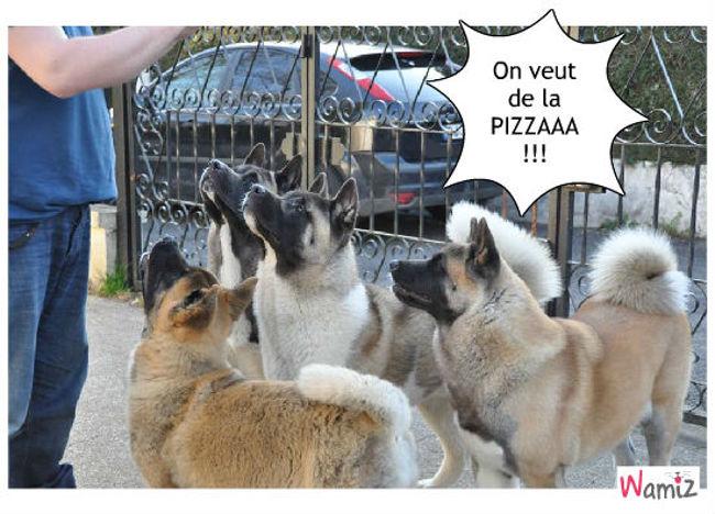 Pizza Party, lolcats réalisé sur Wamiz