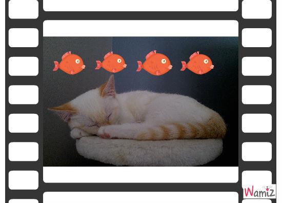 poisson !, lolcats réalisé sur Wamiz