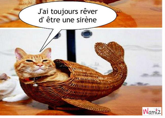 Poisson chat, lolcats réalisé sur Wamiz