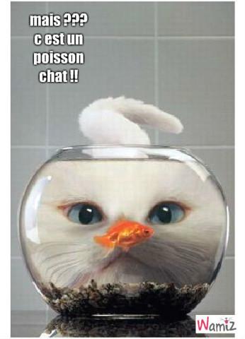 poisson chat !, lolcats réalisé sur Wamiz