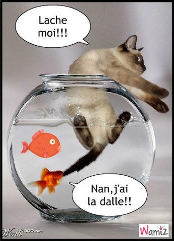 poisson et chat role inversé, lolcats réalisé sur Wamiz