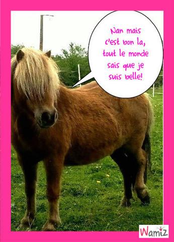 poney très modeste, lolcats réalisé sur Wamiz